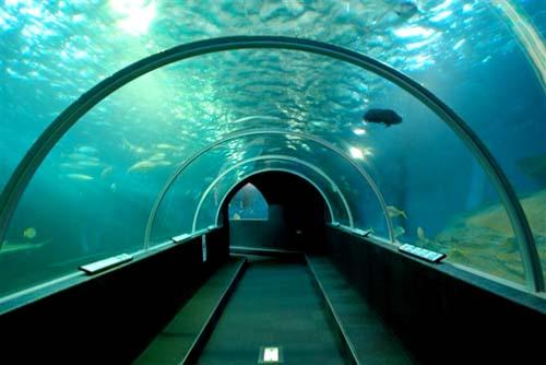 海沧海底隧道今开工 建成后岛内外一体化提速